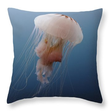 Sea Nettle Jellyfish In Atlantic Ocean Throw Pillow by Karen Doody