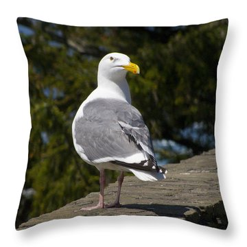 Throw Pillow featuring the photograph Seagull by David Gleeson