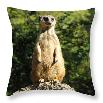 Sentinel Meerkat Throw Pillow by Carla Parris