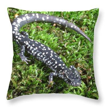 Slimy Salamander Throw Pillow by Ted Kinsman