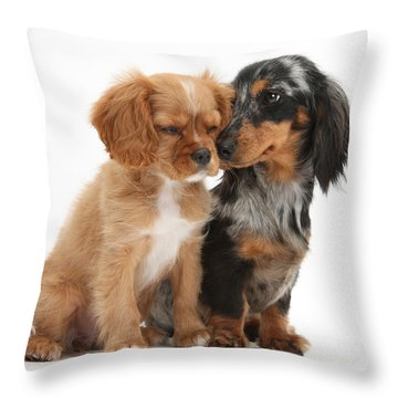Spaniel & Dachshund Puppies Throw Pillow by Mark Taylor