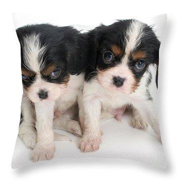 Spaniel Puppies Throw Pillow by Jane Burton