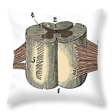 Spinal Cord Throw Pillow
