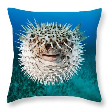 Spotted Porcupinefish Throw Pillow by Dave Fleetham
