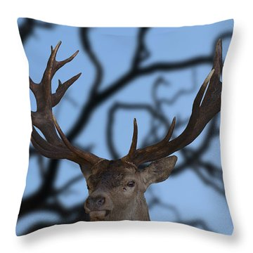 Stag Ramifications Throw Pillow by Michael Mogensen