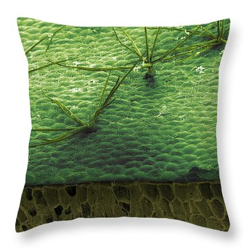 Staghorn Fern, Sem Throw Pillow by Ted Kinsman