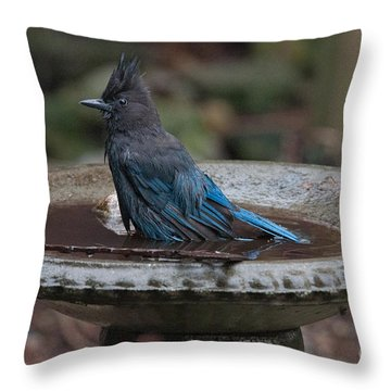 Throw Pillow featuring the digital art Stellar Jay In The Birdbath by Carol Ailles