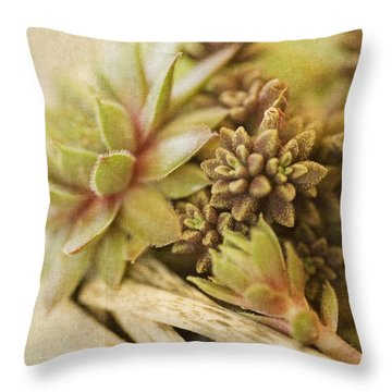 Succulents Throw Pillow by Bonnie Bruno
