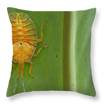 Tessaratomid Nymph Papua New Guinea Throw Pillow by Piotr Naskrecki