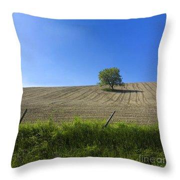 Tree  Throw Pillow by Bernard Jaubert