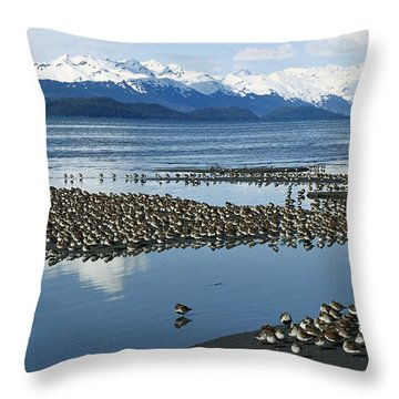 Western Sandpiper Calidris Mauri Flock Throw Pillow by Michael Quinton
