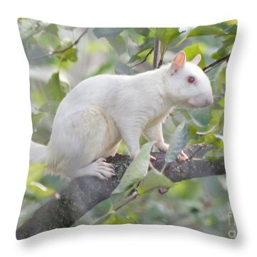 White Squirrel Throw Pillow by Robert E Alter Reflections of Infinity