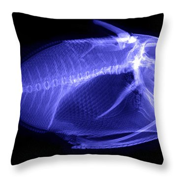 X-ray Of A Clown Triggerfish Throw Pillow by Ted Kinsman