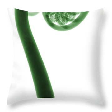 X-ray Of A Fern Throw Pillow by Ted Kinsman