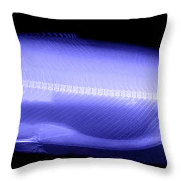 X-ray Of A Trout Throw Pillow by Ted Kinsman