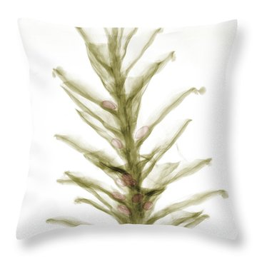 X-ray Of Pinecone With Seeds Throw Pillow by Ted Kinsman