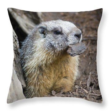 Yellow-bellied Marmot Marmota Throw Pillow