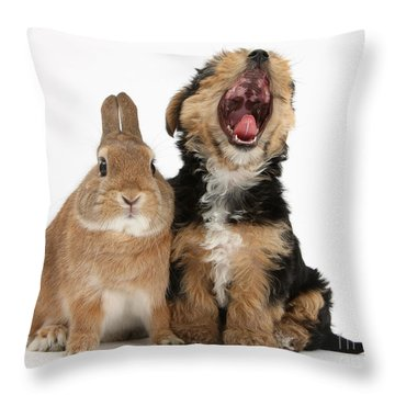 Yorkshire Terrier Pup With Rabbit Throw Pillow by Mark Taylor