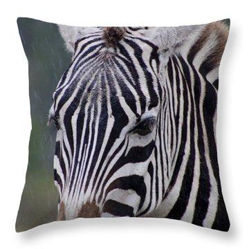 Zebra Throw Pillow by Thomas Marchessault