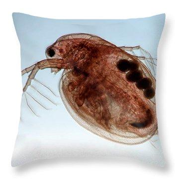 Water Flea Daphnia Magna Throw Pillow by Ted Kinsman