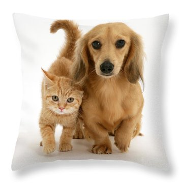 Kitten And Puppy Throw Pillow by Jane Burton
