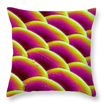 Deer Fly Eye, Sem Throw Pillow by Science Source