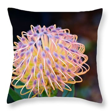 Common Pincushion Protea Throw Pillow