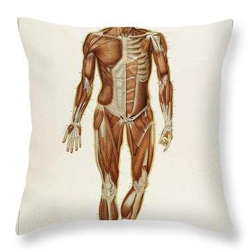 Historical Anatomical Illustration Throw Pillow