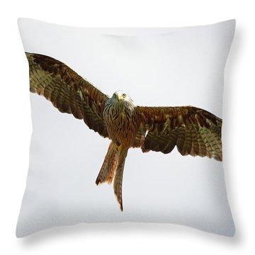 Red Kite In Flight Throw Pillow