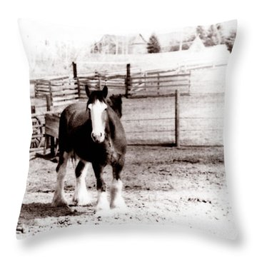1900  Clydesdale Horse Throw Pillow by Marcin and Dawid Witukiewicz