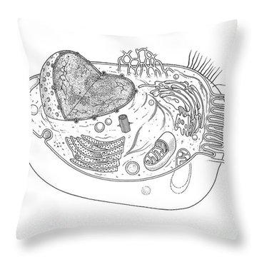 Animal Cell Diagram Throw Pillow by Science Source