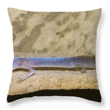 Austin Blind Salamander Throw Pillow by Dante Fenolio
