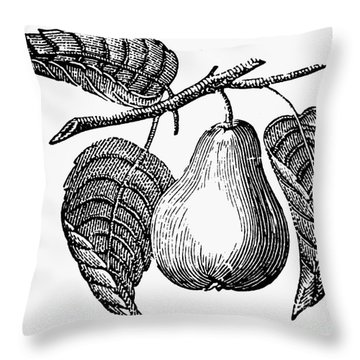 Botany: Pear Throw Pillow by Granger