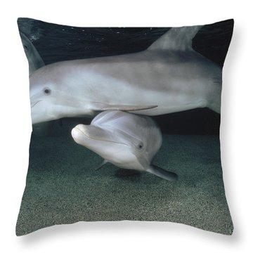 Bottlenose Dolphin Underwater Trio Throw Pillow by Flip Nicklin