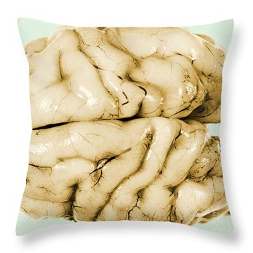 Brain Throw Pillow by Science Source