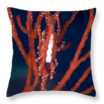 Bright Red Crab On Fan Coral, Papua New Throw Pillow by Steve Jones