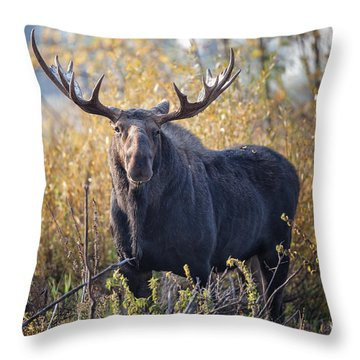 Bull Moose Throw Pillow by Ronald Lutz