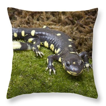 California Tiger Salamander  Monterey Throw Pillow