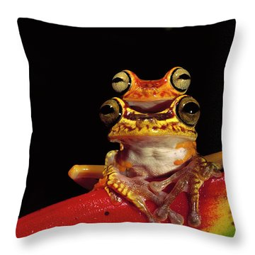 Chachi Tree Frog Hyla Picturata Pair Throw Pillow by Pete Oxford