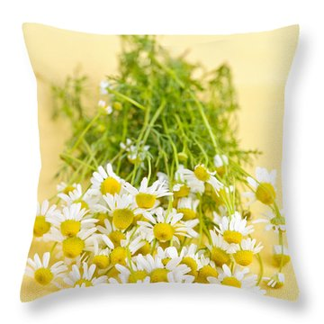 Chamomile Flowers Throw Pillow by Elena Elisseeva