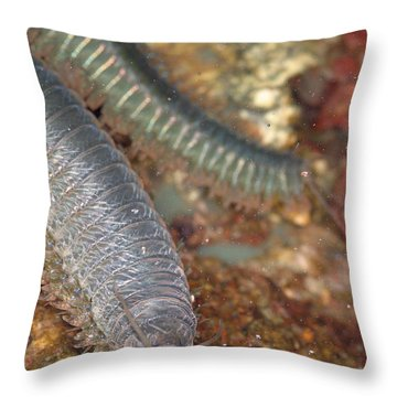 Clam Worm Throw Pillow by Ted Kinsman