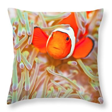 Amphiprion Ocellaris Throw Pillows