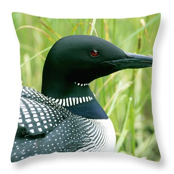 Common Loon, La Mauricie National Park Throw Pillow by Philippe Henry