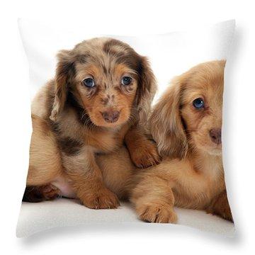Dachshund Pups Throw Pillow by Jane Burton