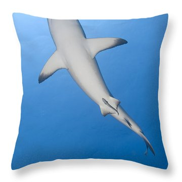Gray Reef Shark With Remora, Papua New Throw Pillow by Steve Jones