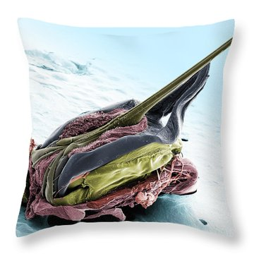 Honey Bee Stinger, Sem Throw Pillow by Ted Kinsman