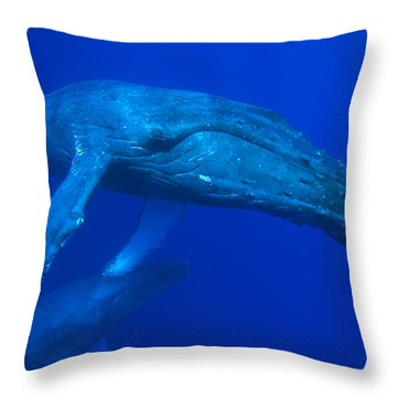 Humpback Whale Underwater Hawaii Throw Pillow by Flip Nicklin