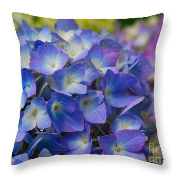 Hydrangea 4 Throw Pillow by Eva Kaufman