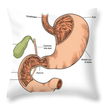 Illustration Of Stomach And Duodenum Throw Pillow