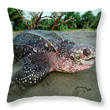 Leatherback Sea Turtle Dermochelys Throw Pillow by Mike Parry